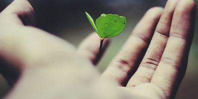 Kleine Pflanze in einer Hand